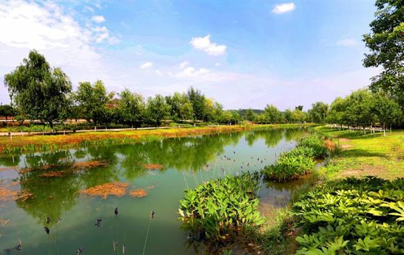小枧生态湿地公园